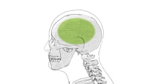 Osteopathie Kiel Kopf