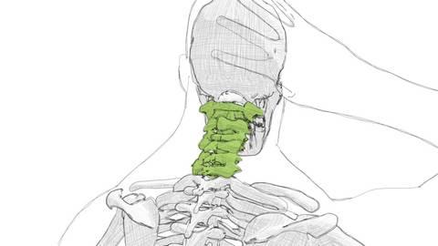 Osteopathie Kiel Halswirbelsäule