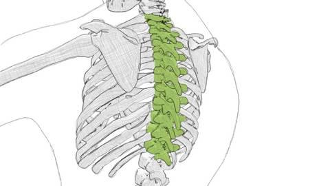 Osteopathie Kiel Wirbelsäule
