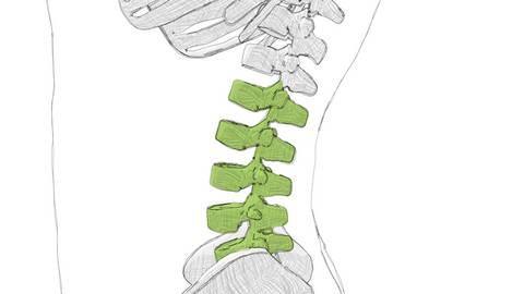 Osteopathie Kiel Lendenwirbelsäule