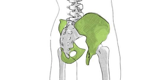 Osteopathie Kiel Becken
